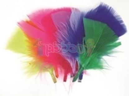 תמונה של נוצות צבעוניים